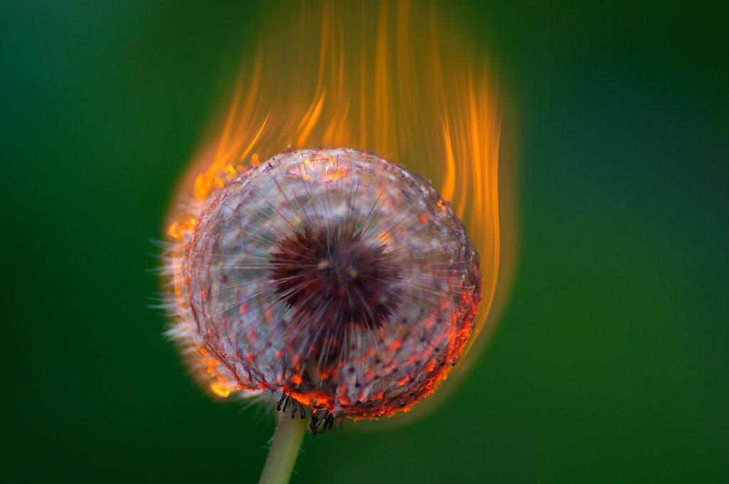 Vinner månedens bilde i april. Foto: Tom Strande. Tittel: Kreative flammer