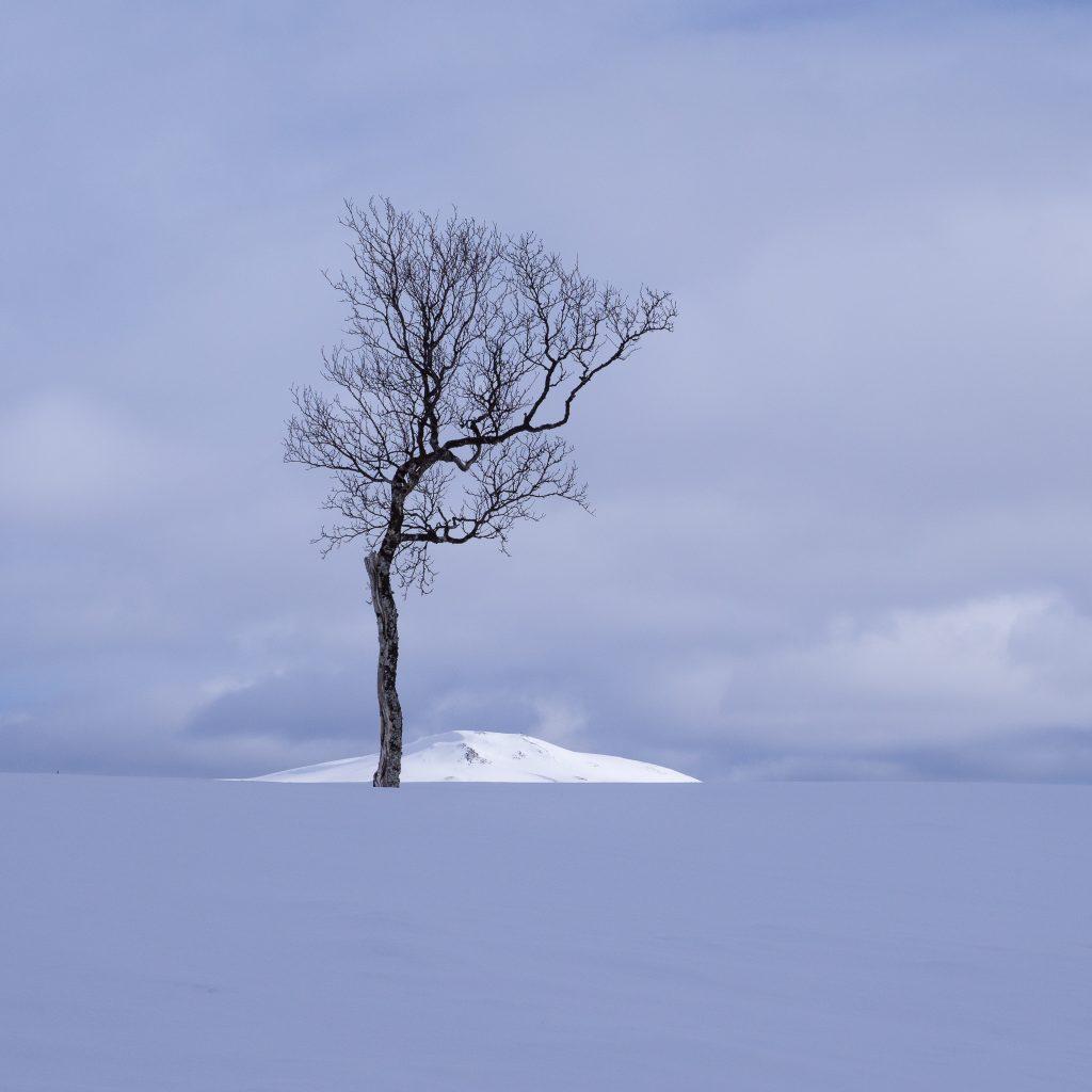 Vinner månedens bilde i mai. Foto: Trond Hansen. Tittel: Topptre